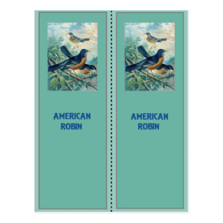 Carte Postale Signets de Robin d'Américain