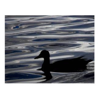 Carte Postale Silhouette de canard