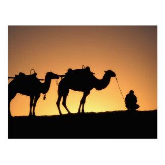 Carte Postale Silhouette de caravane de chameau sur le désert à