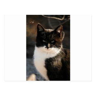 Carte Postale Smoking noir et blanc Kitty
