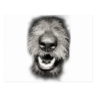 Carte Postale Sourire drôle de visage de chien
