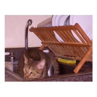 Carte Postale Sous-Chef de chat se cachant dans l'évier