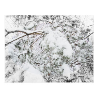 Carte Postale Sous le poids de neige