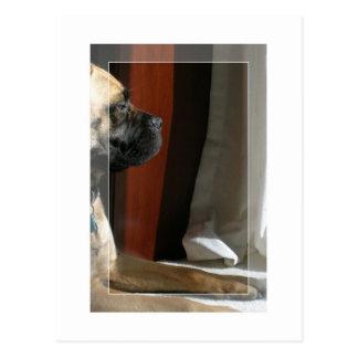 Carte Postale Sphinx de Bullmastiff
