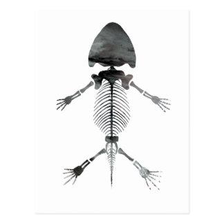 Carte Postale Squelette amphibie