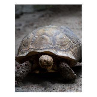 Carte postale stimulée africaine de tortue