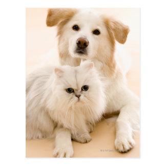 Carte Postale Studio tiré du chat et du chien