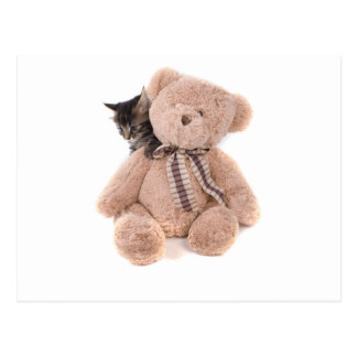Carte Postale tabby kittens playing with a teddy bear