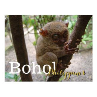 Carte Postale Tarsier philippin de Bohol