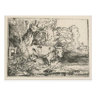 Carte Postale Taureau par Rembrandt