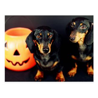 Carte Postale Teckel Halloween