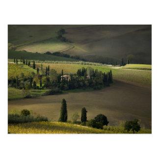 Carte Postale Terres cultivables autour de Montepulciano,