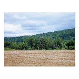 Carte Postale Terres cultivables du Maine