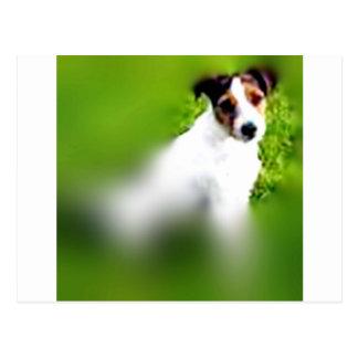 Carte Postale terrier