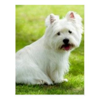 Carte Postale terrier écossais