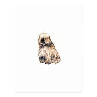 Carte Postale Terrier tibétain