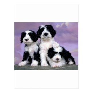 Carte Postale Terriers de Tibetern