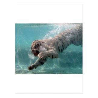 Carte Postale Tigre blanc allant pour la prière