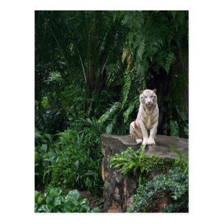 Carte Postale Tigre blanc dans la jungle
