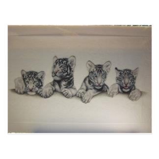 Carte Postale Tigre CUB blanc rare