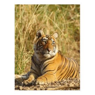 Carte Postale Tigre de Bengale royal en dehors de la prairie,