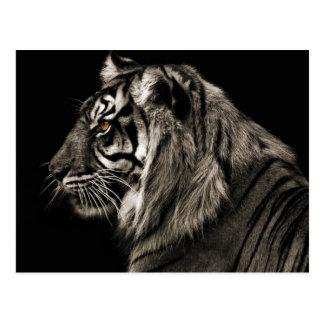 Carte Postale Tigre de tigre