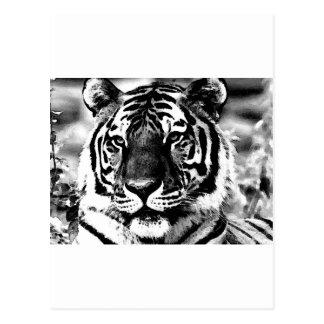 Carte Postale Tigre noir et blanc