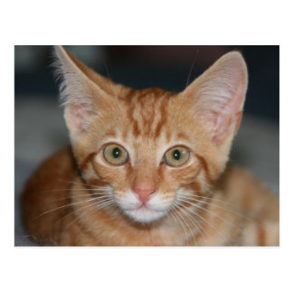 Carte postale tigrée orange de chaton