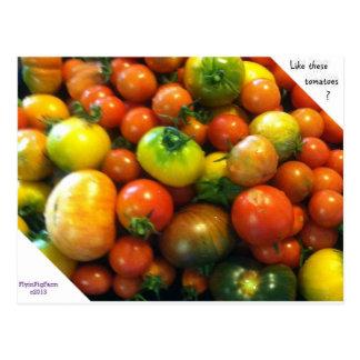 Carte Postale Tomates d'héritage