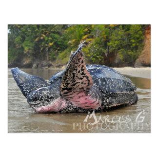 Carte Postale Tortue de Leatherback