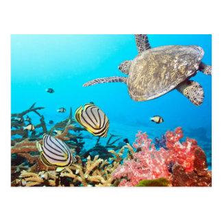 Carte Postale Tortue Naturescape de récif coralien