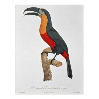 Carte Postale Toucan : Grand Rouge-Gonflé par Jacques Barraband