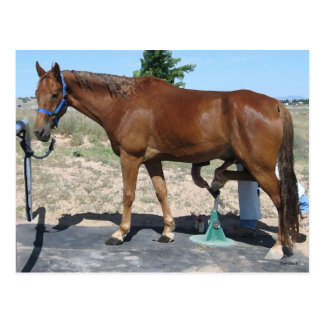 Carte Postale Tout le soin de maréchal-ferrant de cheval