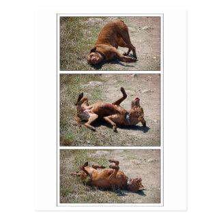 Carte Postale Triptyque maladroit heureux de chien de mélange de