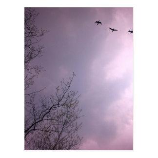 Carte Postale Trois oiseaux volent tellement haut
