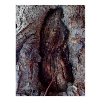Carte Postale Tronc d'arbre naturel organique par Sharles