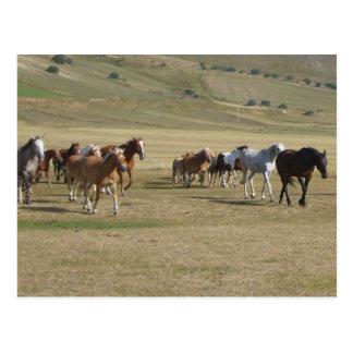 Carte Postale Troupeau de chevaux
