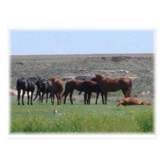 Carte Postale Troupeau de chevaux et de chien de prairie - le