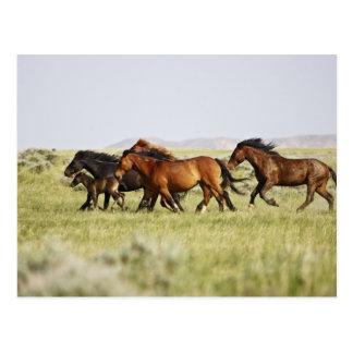 Carte Postale Troupeau sauvage de caballus d'Equus de cheval) de