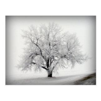 Carte Postale Un arbre solitaire de Frostry dans la prairie du