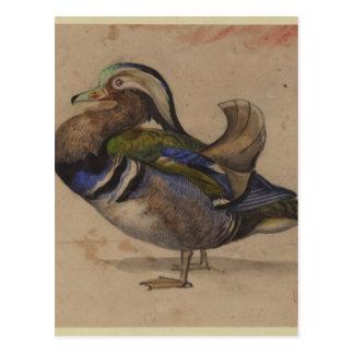 Carte Postale Un canard de mandarine par Eugene Delacroix