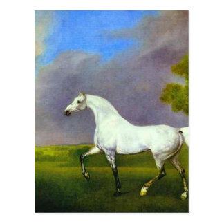 Carte Postale Un cheval gris par George Stubbs