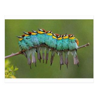 Carte Postale Un Oiseau-erpillar