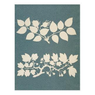 Carte Postale Une branche de rose et branche de jasmin