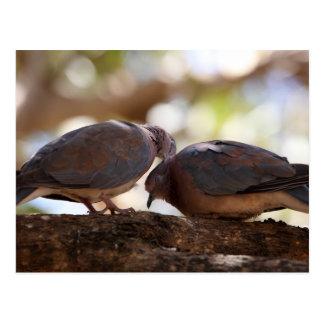 Carte Postale Une paire de colombes riantes