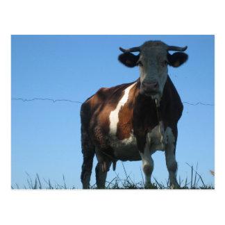 Carte Postale Vache