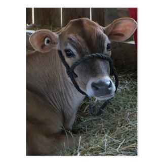 Carte Postale Vache à foire régionale