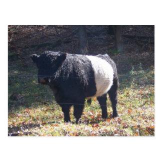 Carte Postale Vache à Oreo