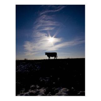 Carte Postale vache au soleil