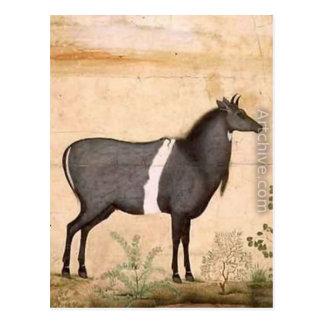 Carte Postale Vache bleue à Nilgai par Ustad Mansur
